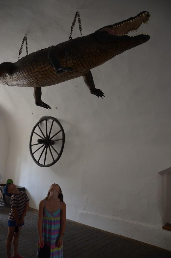 Brno draak of krokodil