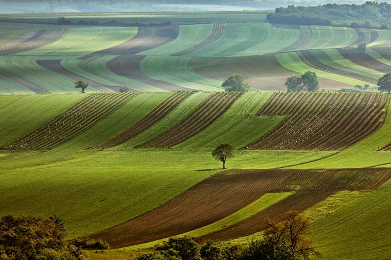 Fietsen in Moravie