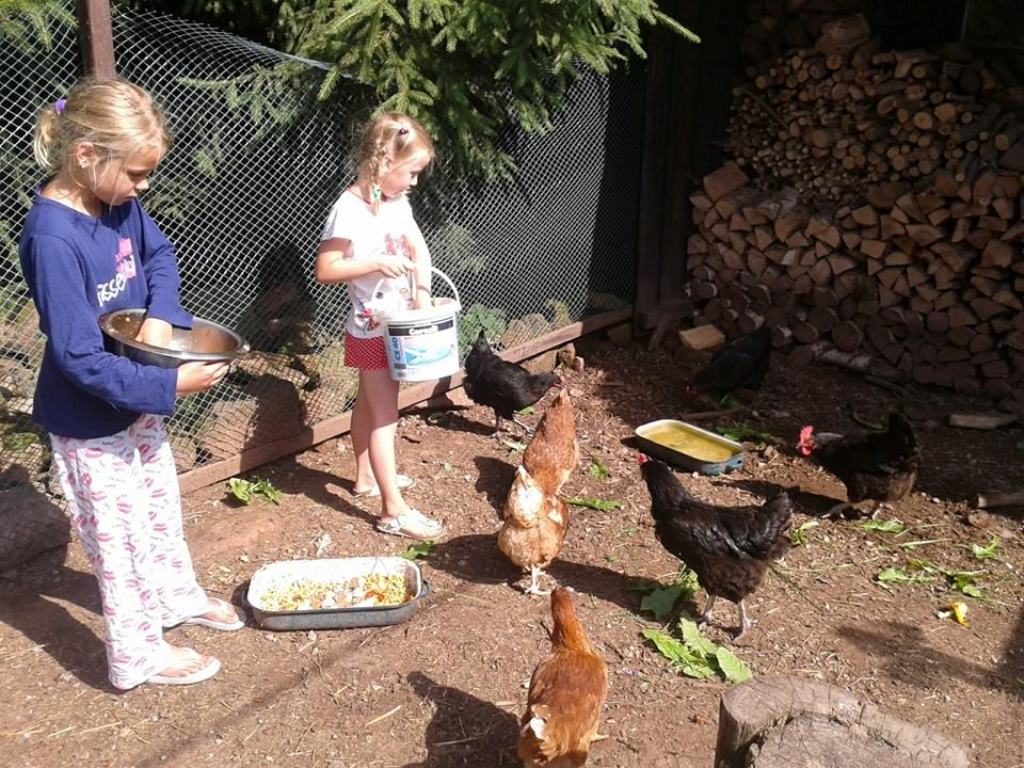Tsjechische camping de Sprookjesmolen Kippen voeren