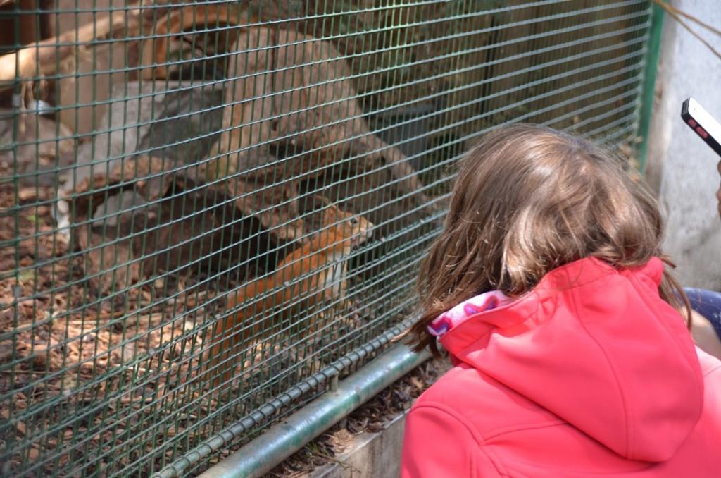 Zoopark Vyskov eekhoorn